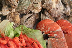 Oyters,Shrimps and Lobsters. Waiting to be cooked Royalty Free Stock Photography