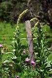 Bain of Farmers in Ozarks stock image