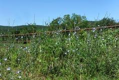 Ozark Roadside Wildflowers och staket Arkivbild
