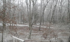 Ozark winter woods. The cold ozark woods in wintertime stock photos