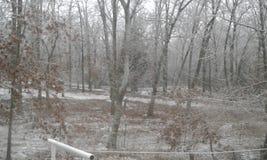 Ozark winter woods. The cold ozark woods in wintertime Stock Photos