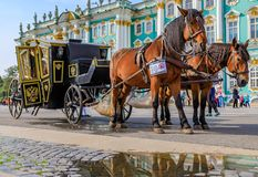 Ozdobny koński kareciany oczekuje turysta przed zima pałac - erem na pałac kwadracie w Świątobliwym Petersburg, Rosja zdjęcia royalty free