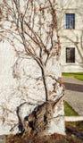 Ozdobny rozgałęzia się drzewo Fotografia Stock