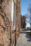 Ozdobny rozgałęzia się drzewo Obrazy Stock