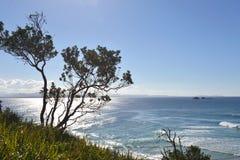 Ozean-Ansicht-mit-ein-Baum-in-d-Vordergrund Stockfotografie
