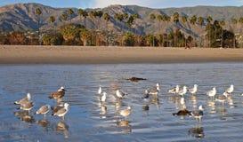 Ozean, Berge, Palmen, Seemöwen und Sandy Beach Lizenzfreie Stockfotografie