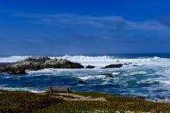 Ozean an der pazifischen Waldung Stockbilder