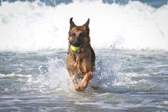 Ozean des Schäferhund-Hundi Lizenzfreie Stockfotografie