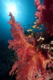 Ozean, Fische und Koralle stockbilder