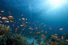 Ozean, Koralle und Fische Lizenzfreies Stockbild