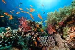 Ozean, Koralle und Fische Lizenzfreies Stockfoto