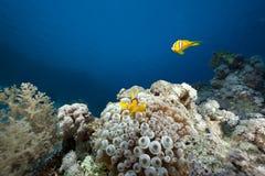 Ozean-, Korallen- und Luftblasenanemone Lizenzfreie Stockfotografie