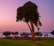 Ozean-Park bei Sonnenuntergang lizenzfreies stockfoto