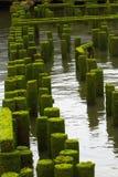Ozean-Pier ruiniert weit Stockfotografie