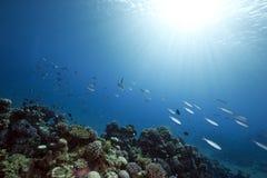 Ozean, Riff und Fische lizenzfreies stockfoto