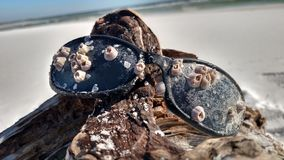 Ozean-Tag Lizenzfreie Stockbilder