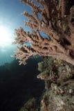Ozean und Acropora Lizenzfreies Stockbild
