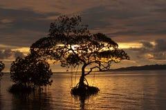 Ozean und Baum Lizenzfreie Stockbilder