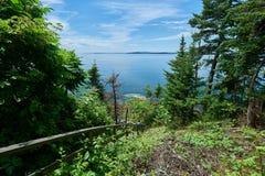 Ozean und Wald Lizenzfreie Stockfotos