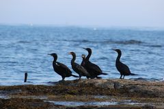 Ozean-Vögel Lizenzfreies Stockfoto