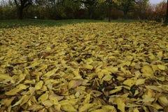 Ozean von gefallenen Blättern Lizenzfreie Stockbilder