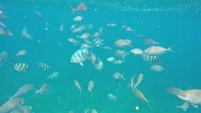 Ozeanblau unter Wasserfischschwimmen durch Meer stock footage