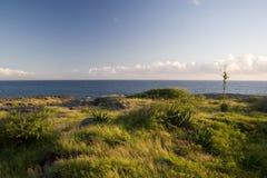 Ozeangrün stockfotografie
