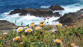 Ozeanpurpurblumen Stockbild