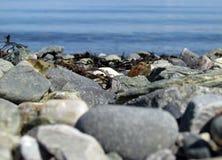 Ozeanstrand entsteint Sommertag Stockfoto