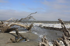 Ozeanstrand mit Antriebholz im Naturzustand Lizenzfreie Stockbilder