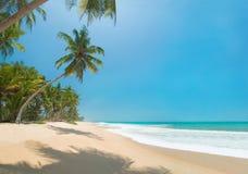 Ozeanstrand mit Palmen am sonnigen Tag Stockfotografie