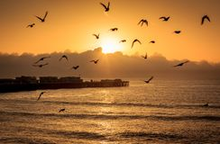Ozeanvögel an der Dämmerung lizenzfreies stockfoto