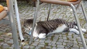 Oziare gatto Fotografia Stock Libera da Diritti
