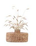 Łozinowa waza z pszenicznymi ucho. Obrazy Stock