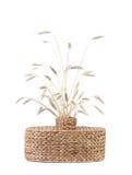 Łozinowa waza z pszenicznymi ucho Obraz Royalty Free