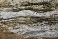 oznaczony drewna Zdjęcie Stock