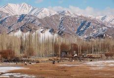 Ozono fresco in valle di Leh durante l'inverno Fotografia Stock Libera da Diritti