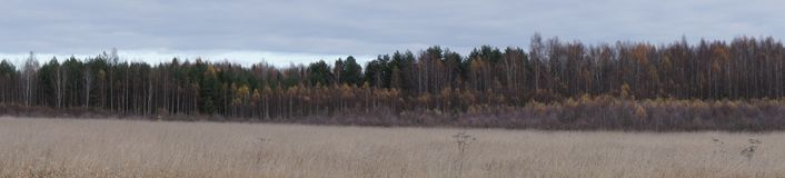 Late autumn in the Moscow region. After the first night frosts Royalty Free Stock Photos