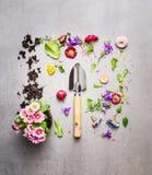Pá de mão e planta das flores com folhas e pétalas no fundo de pedra cinzento, vista superior que compõe Imagem de Stock Royalty Free