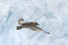 Págalo en vuelo Imagen de archivo libre de regalías