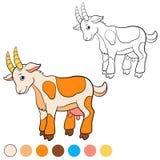 Página da coloração Colora-me: cabra Cabra bonito Fotografia de Stock