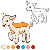 Página da coloração Colora-me: cabra Cabra bonito pequena do bebê Imagem de Stock Royalty Free