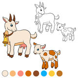 Página da coloração Colora-me: cabra Cabra bonito pequena do bebê Fotos de Stock Royalty Free