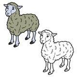 Página da coloração dos carneiros Fotos de Stock Royalty Free