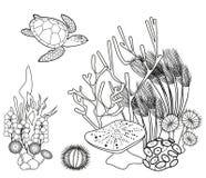 Página da coloração Página fishColoring do aquário tropical do mar Recife de corais com tartaruga e outros animais marinhos ilustração stock