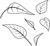 Página que colorea con las hojas Imagen de archivo libre de regalías