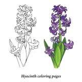 Páginas da coloração do jacinto Foto de Stock Royalty Free
