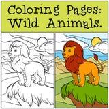 Páginas del colorante: Animales salvajes León hermoso lindo Imagen de archivo libre de regalías