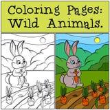 Páginas del colorante: Animales salvajes Pequeño conejo lindo Fotos de archivo