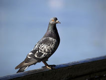 Pájaro [1] Imagenes de archivo
